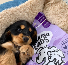 puppy with a bag of barking heads puppy days