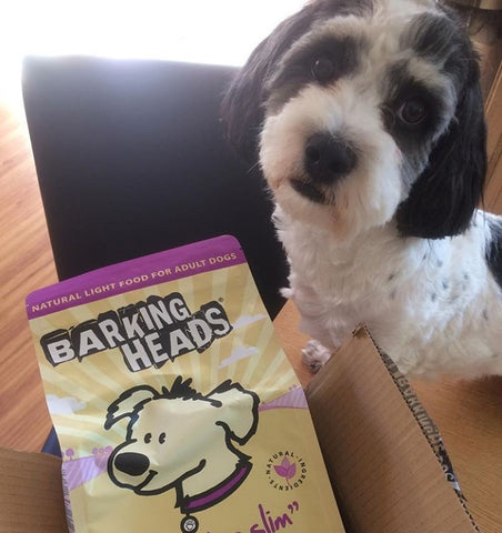 dog with a bag of barking heads