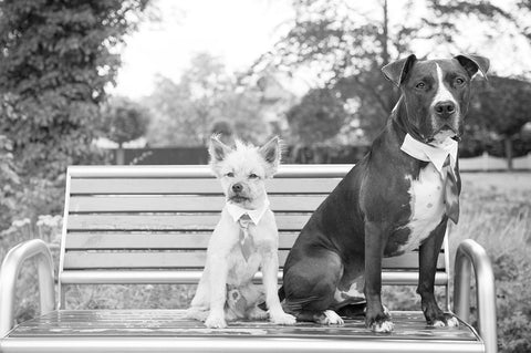 two dogs in a park wearing ties