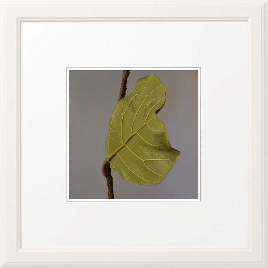 Leaf in the Room - NOBIG.ART