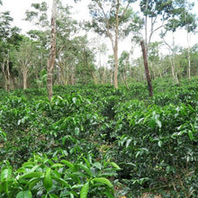 Panama Abu Washed Geisha Reserve - Jose Pretto Farm Award-Winning Coffee - Smoky Mountain Fresh Roast Coffee