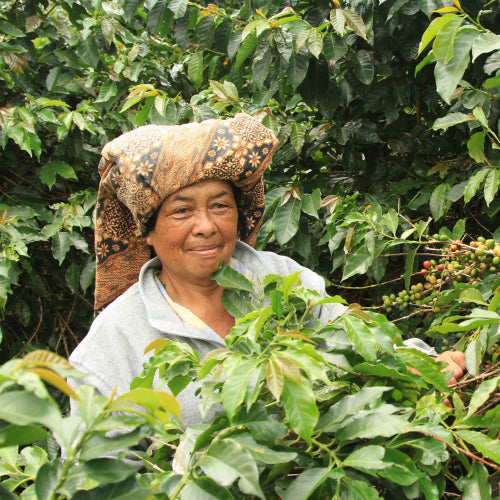 Sumatra Mutu Batak Award-Winning Coffee - Smoky Mountain Fresh Roast Coffee
