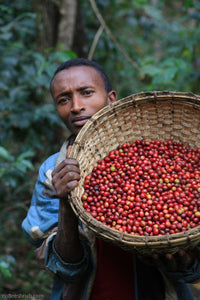 Ethiopia Yirgacheffee Washed / Natural 50:50 Coffee - 93 Points - Smoky Mountain Fresh Roast Coffee
