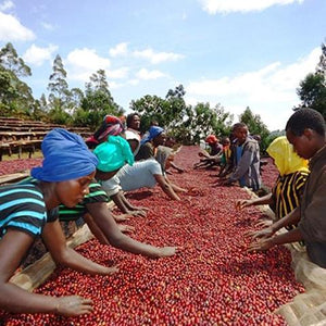 Ethiopia Yirgachefee Natural Coffee - Smoky Mountain Fresh Roast Coffee