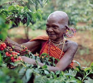 Kenya Kikuyu Tribe Othaya Cooperative Award-Winning Coffee - 93 Points - Smoky Mountain Fresh Roast Coffee