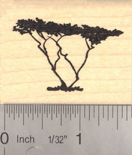 Acacia Tree Rubber Stamp