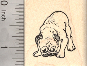 Pug Dog Rubber Stamp