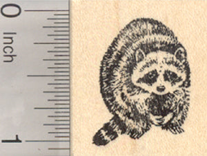 Raccoon Rubber Stamp, North American Racoon, Coon, Small