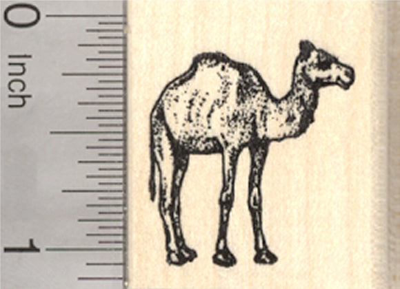 Camel Rubber Stamp, Small dromedary