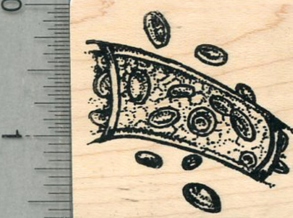 Red Blood Cells Rubber Stamp, Anatomy Biology Series