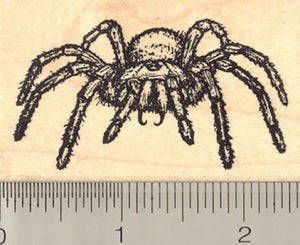 Tarantula Spider Rubber Stamp