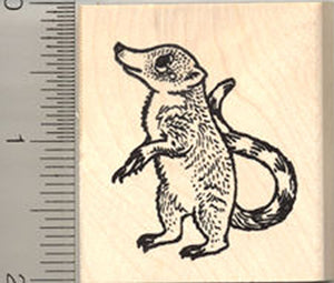 Coatimundi Rubber Stamp