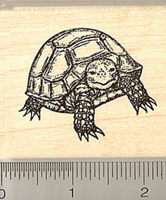 Russian Tortoise Rubber Stamp, Baby Horsfield's, Pet Turtle