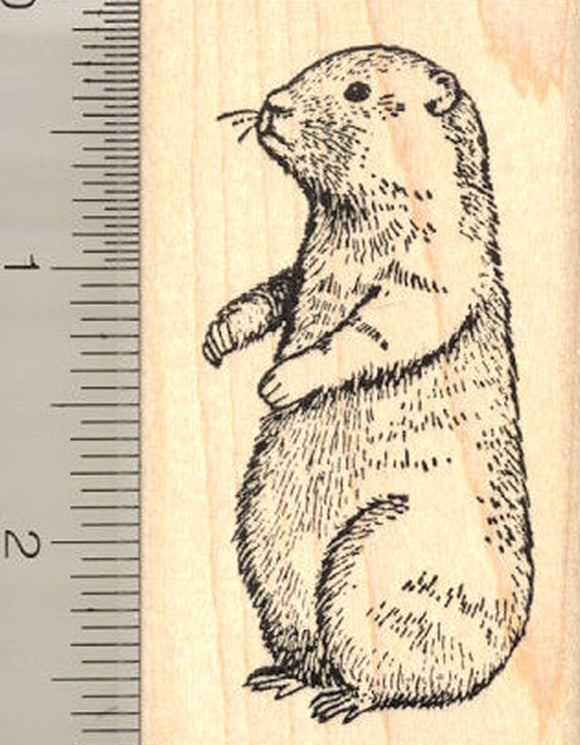 Groundhog Rubber Stamp, Woodchuck, Whistle-pig, Marmot