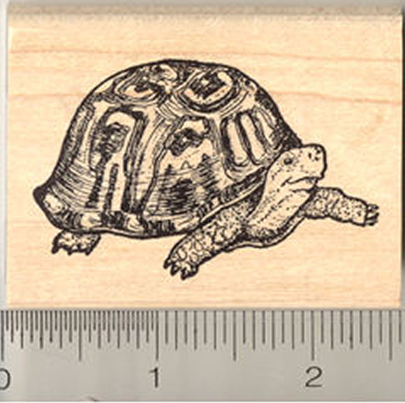 Box Turtle Rubber Stamp