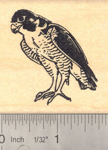 Falcon Rubber Stamp. Raptor Bird of Prey