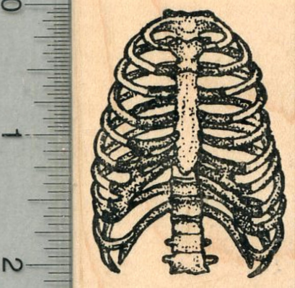 Human Rib Cage Rubber Stamp, Anatomy Biology Series