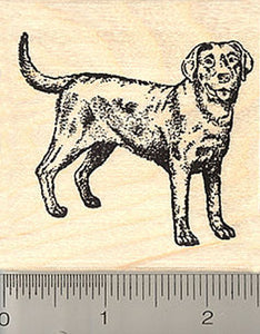 Black Labrador Retriever Dog Rubber Stamp
