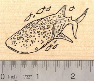 Whale Shark Rubber Stamp Australian Reef Fish