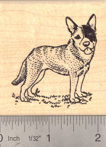Australian Cattle Dog Rubber Stamp (Blue Heeler)
