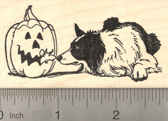 Halloween Border Collie Dog Rubber Stamp, with Jack o' Lantern Rat