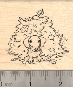 Dachshund Dog Rubber Stamp, in Autumn Leaves, Wiener Doxie
