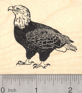 Bald Eagle Rubber Stamp, Raptor, Bird of Prey