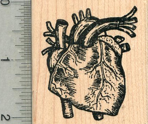 Human Heart Rubber Stamp,  Anatomy Biology Series
