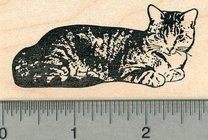 Cat Rubber Stamp, Shorthaired Kitty