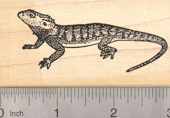 Bearded Dragon Rubber Stamp, Pogona Reptile, Lizard of Australia