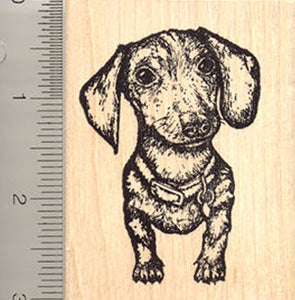 Dachshund Dog Rubber Stamp, Beautiful Detailed and Realistic