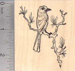 Western Scrub Jay Rubber Stamp, New World Blue Jays
