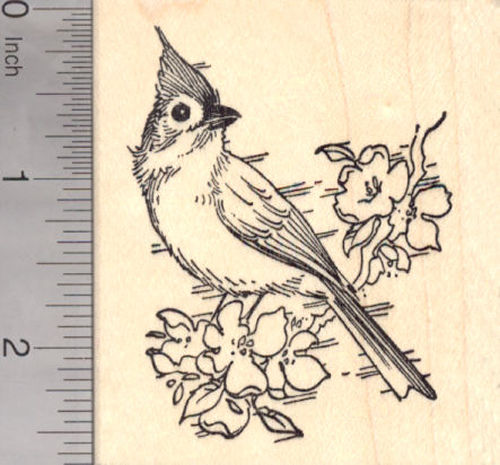 Tufted Titmouse, North American Songbird in the Tit and Chickadee Family