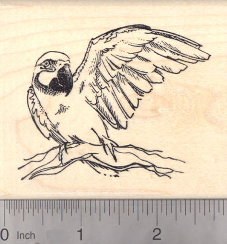 Macaw, New World Parrot Rubber Stamp, Rainforest Bird