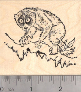 Slow Loris in Tree Rubber Stamp, Wildlife, Primate