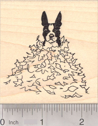 Boston Terrier Dog Sitting in Autumn Leaves, Thanksgiving Rubber Stamp