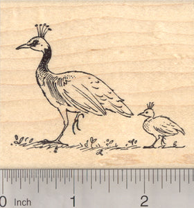 Peahen and Chick Rubber Stamp, Female Peacock Bird, Peafowl