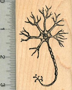 Neuron Rubber Stamp, Nerve Cell, Anatomy Biology Series