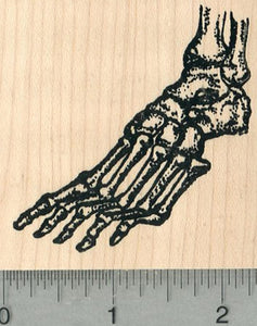 Skeletal Foot Rubber Stamp, Human Anatomy Biology Series
