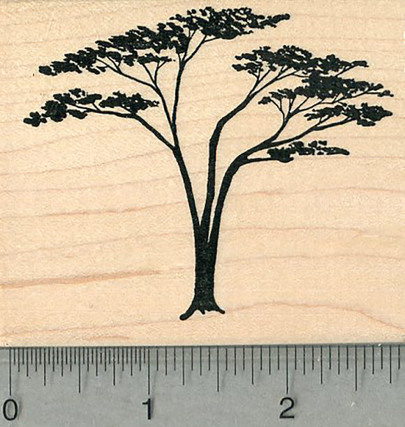 Acacia Tree Rubber Stamp, Scenery Series