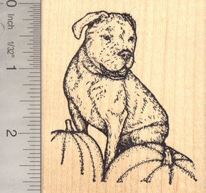 Olde English Bulldogge, (Lady Ghost Rider) Dog Rubber Stamp, With Pumpkins