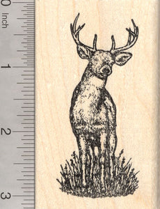White Tailed Deer Rubber Stamp North American Wildlife RubberHedgehog Stamps
