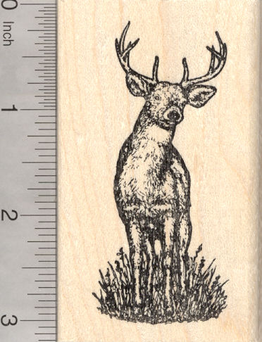 White-Tailed Deer Rubber Stamp, North American Wildlife