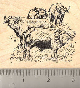 African Buffalo Rubber Stamp