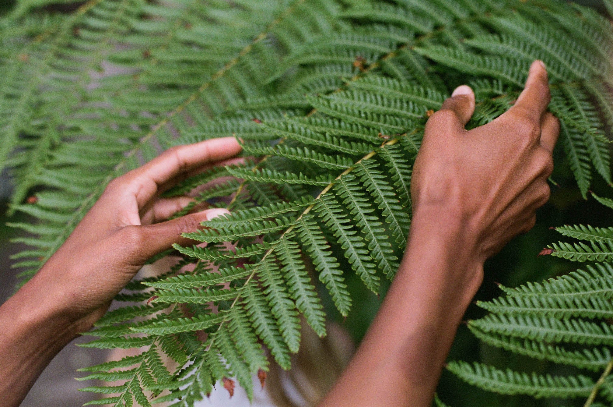 Two hands gently touching a vivid green fern frond. Shot by Kate Rentz.