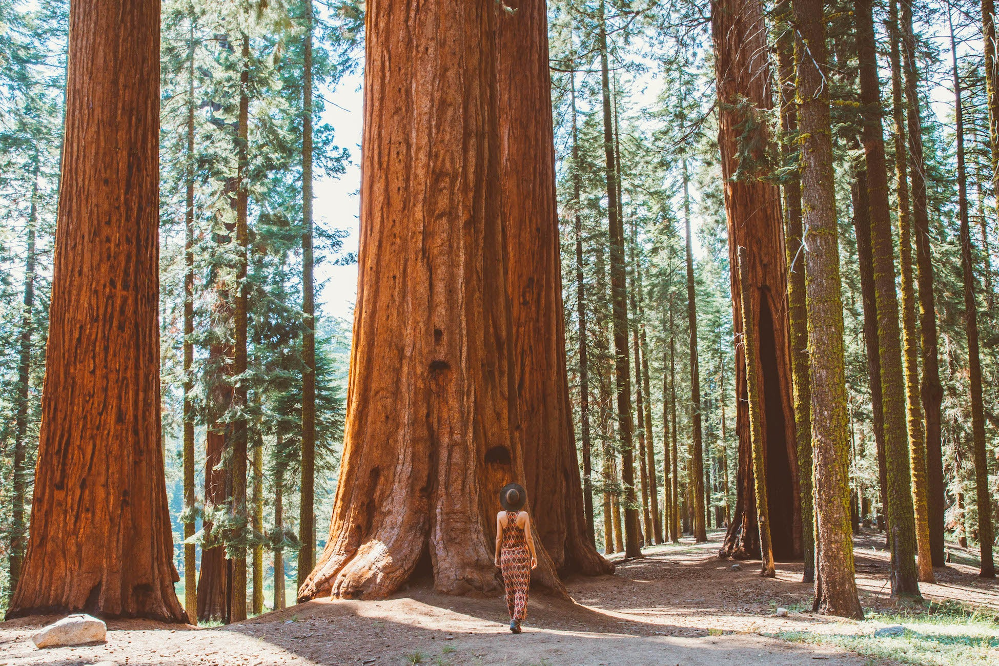 Woman stands in front of an enormous redwood tree in a grove of many tall trees.