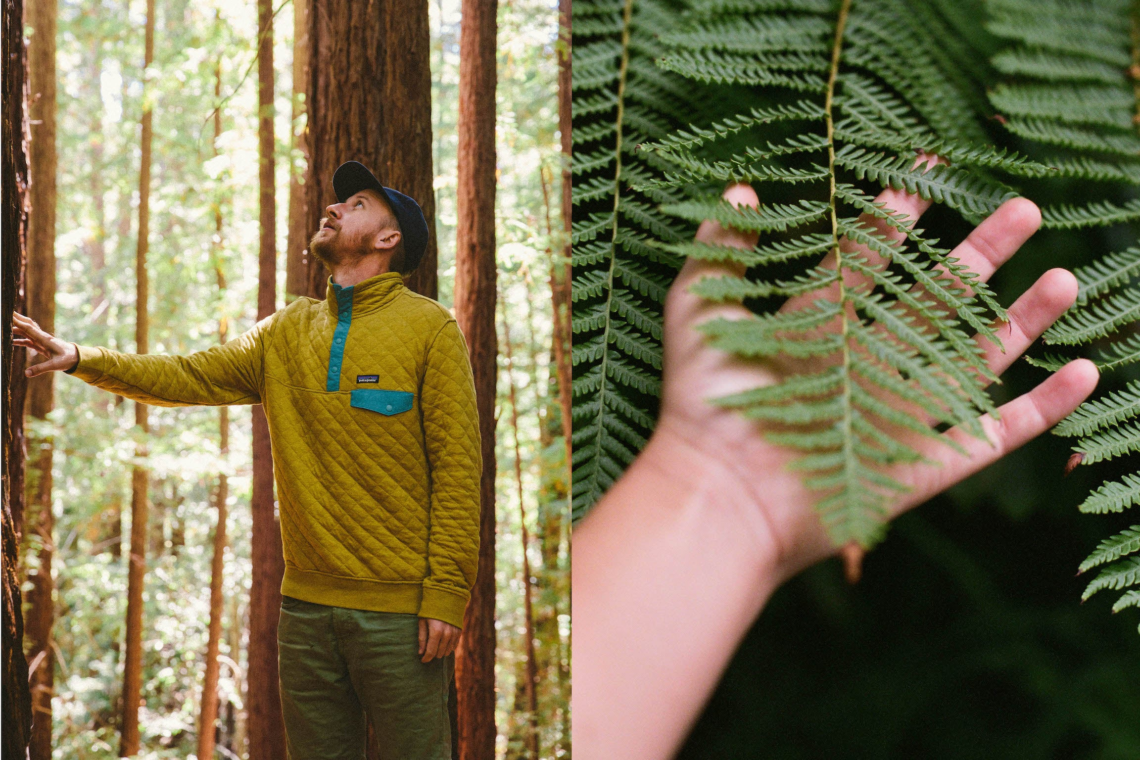 Two images: on the left, a man wears a sporty pullover while looking up at a tall redwood tree. On the right, a hand gently touches a green palm frond. Shot by Kate Rentz.