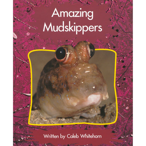 Amazing Mudskippers