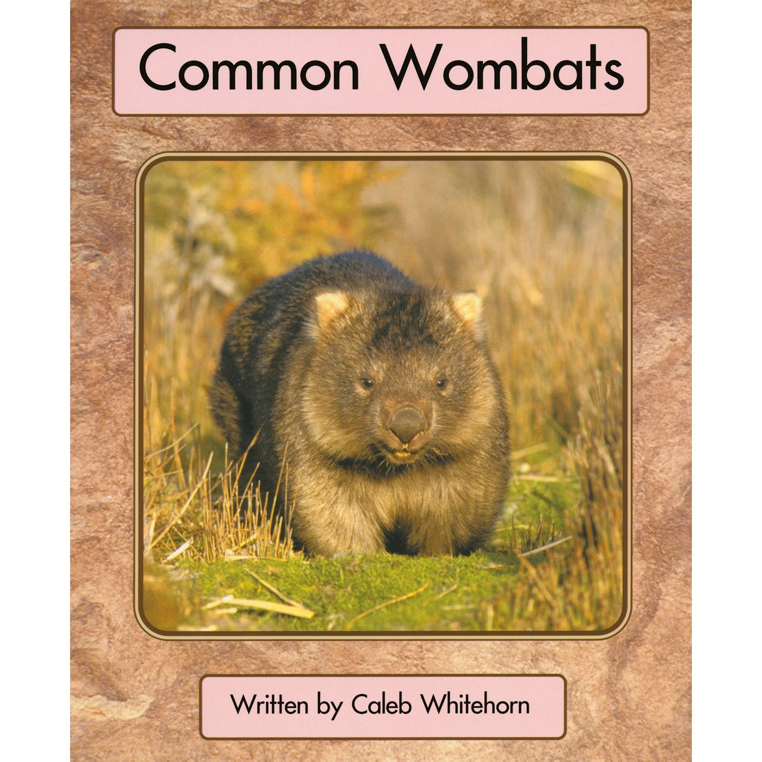 Common Wombats