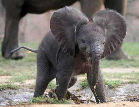 top 20 cutest elephant pictures on the web the elephant kingdom